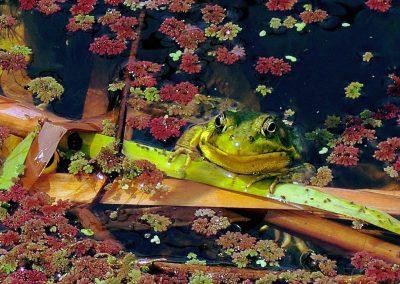 Happy-Frog-at-Terra-Nova