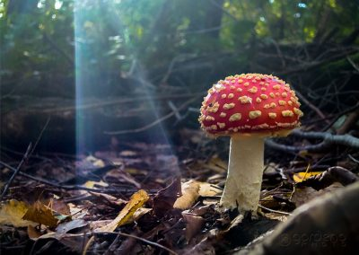 Red-Mushroon-at-Nature-Park